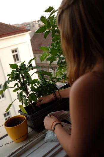 Die beste Pflanzenerde ist selbstgemacht