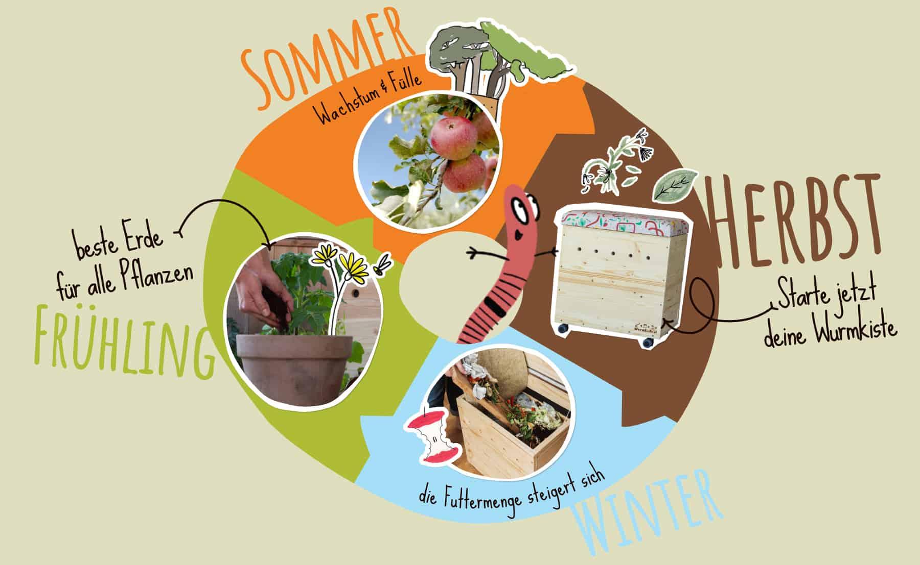 Der Jahreskreis mit der Wurmkiste. Im Herbst starten, im Winter füttern, im Frühling ernten, im Sommer genießen.