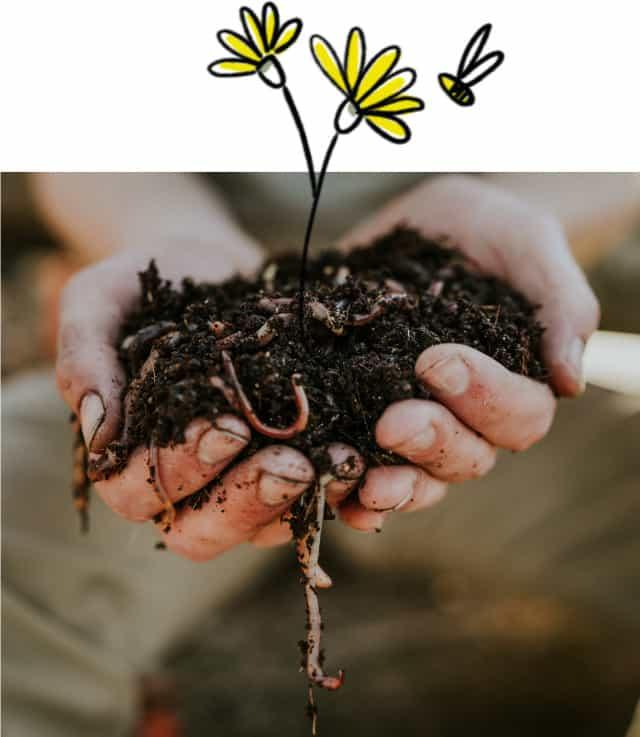 Zwei Hände gefüllt mit Erde und Kompostwürmern. Zwei Würmer hängen aus den Händen, aus der Erde wachsen illustrierte Blumen. Eine Biene fliegt neben der gelben Blume.